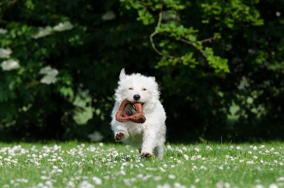 Huesos de carnaza dañinos para tu perro