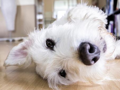 ¿Cómo tener un perro en un departamento?
