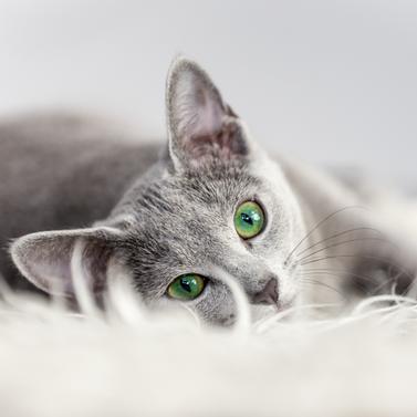 ¿Por qué tu gato rocía? ¡Aquí te damos 5 razones!