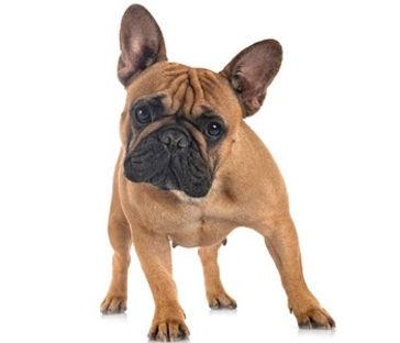 datos sobre perros