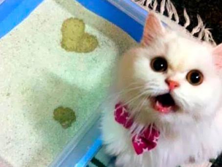 ¿Cómo escoger la arena ideal para tu gato?