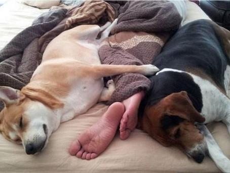 ¿Duermes con tu perro? ¡Debes leer esto!