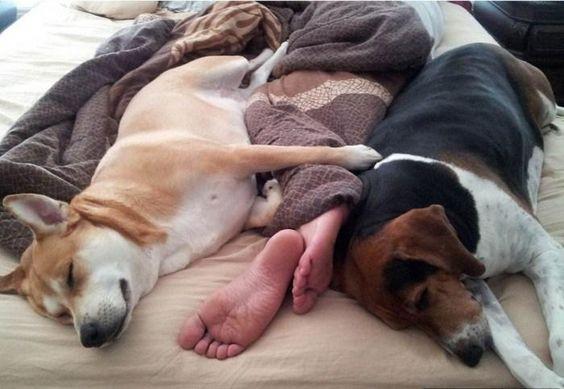 Eres de los que duerme con tu perro Debes saber esto