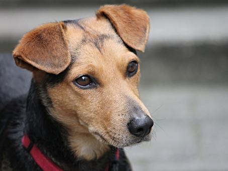 ¿Por qué los perros inclinan la cabeza cuando les hablamos?