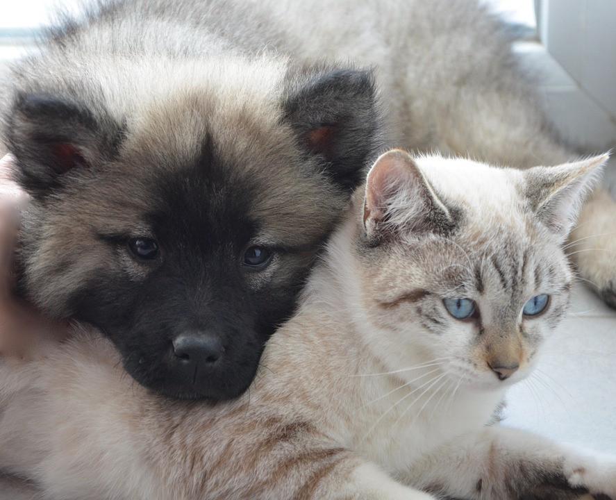 Que dice tu perro o gato sobre tu personalidad
