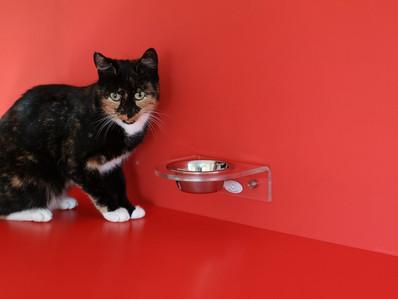 ¿Cómo saber cuál es el peso ideal de un gato?