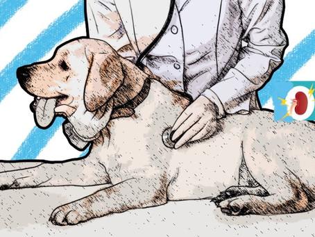 Enfermedad Renal en Gatos y Perros: Síntomas, Causas y Tratamientos