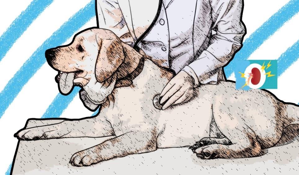 Enfermedad del riñón en mascotas