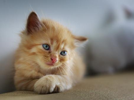Gastritis en gatos: síntomas, causas y consecuencias