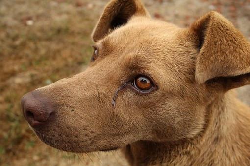 Cuales son las enfermedades en perros sin vacunas