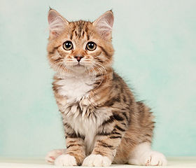 datos curiosos sobre tu gato
