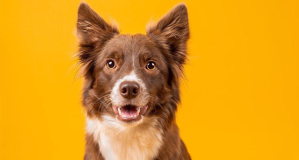 Conoce los datos curiosos sobre tu perro