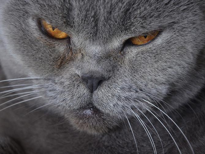 Vivir con un gato anciano: ¡todo lo que debes saber!