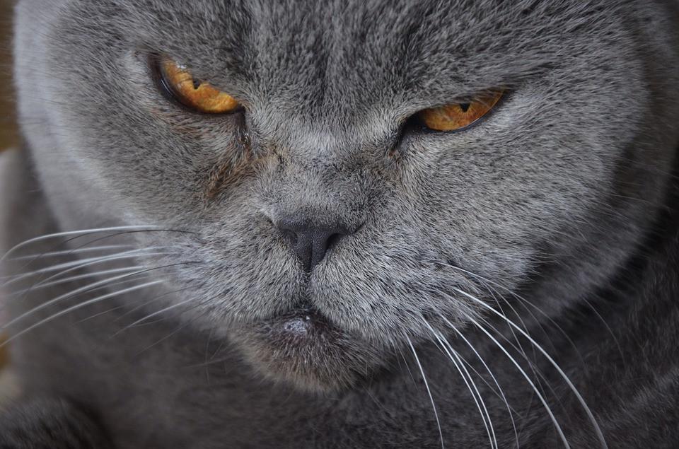 Cómo tener un gato anciano en casa