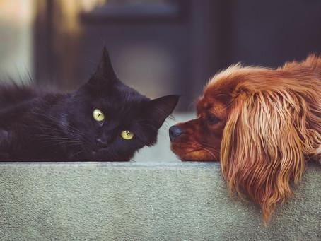 ¿Cómo es tu personalidad según tu mascota?