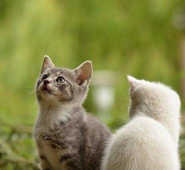 ¿Cómo tener dos gatos en casa y no morir en el intento?