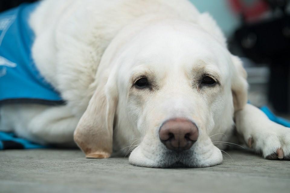 Qué hacer en caso de vómito en perros
