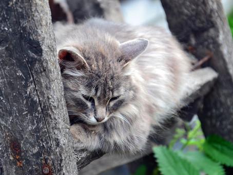 Claves para detectar si tu gato tiene dolor y qué hacer
