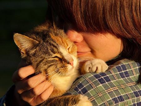 Nombres para gatos: ¿cómo escoger el mejor?