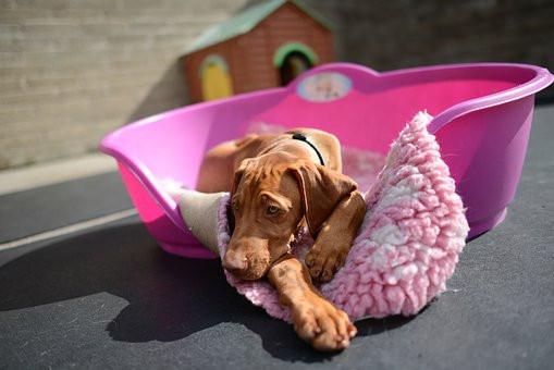 En dónde dejar tu perro cuando te vas de vacaciones