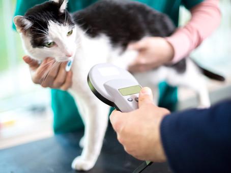 Should You Microchip Your Pet?