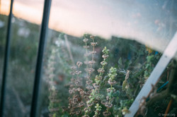 Prairie-MID-LeVietPhotography-0919-IMG_2