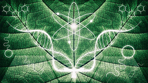 cittar-wellness_innovations_nature.jpg