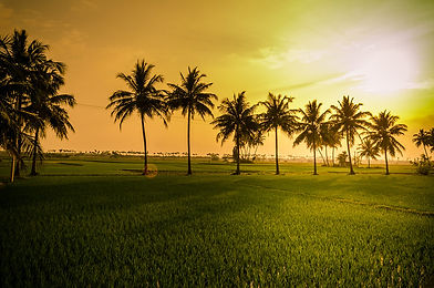 TYOGA_Tamil_Nadu_