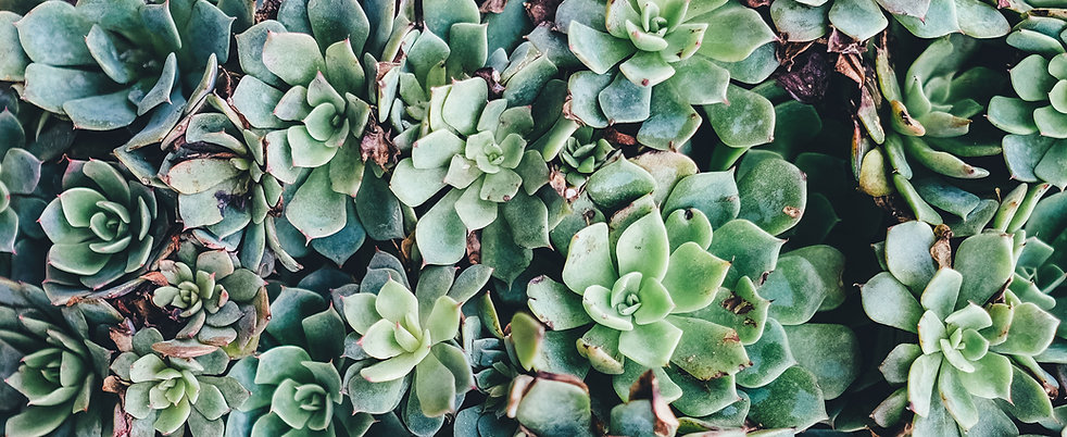 Succulents Image- Do I Have PTSD?