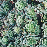 Succulents to convey coping skills to manage anxiety, deression, and flashbacks