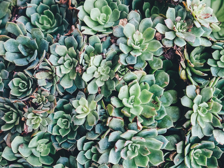 Creating Depth Through Color Value + Contrast: Paint A Watercolor Succulent