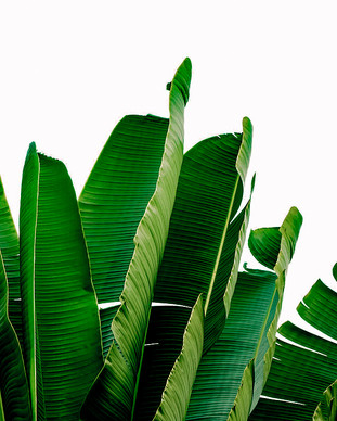 banana-leaves-rafael-farias.jpg