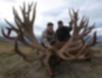 Adirondack Red Stag Genetics
