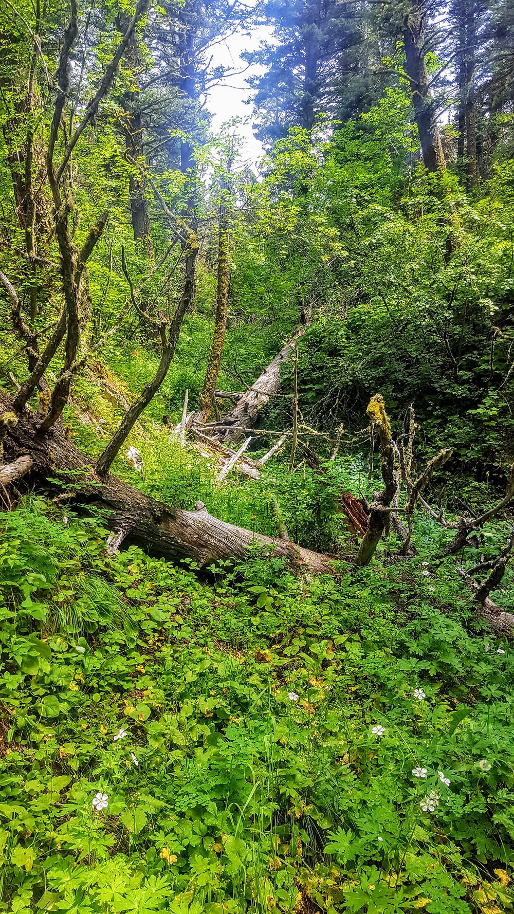 Lush forests along a Bozeman trail.
