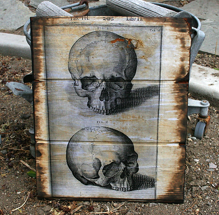 Human Skull: front and side view
