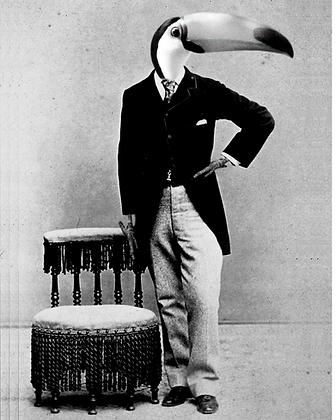 Toucan Man