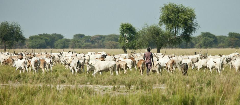 Outbreak of Rift Valley Fever in Sudan