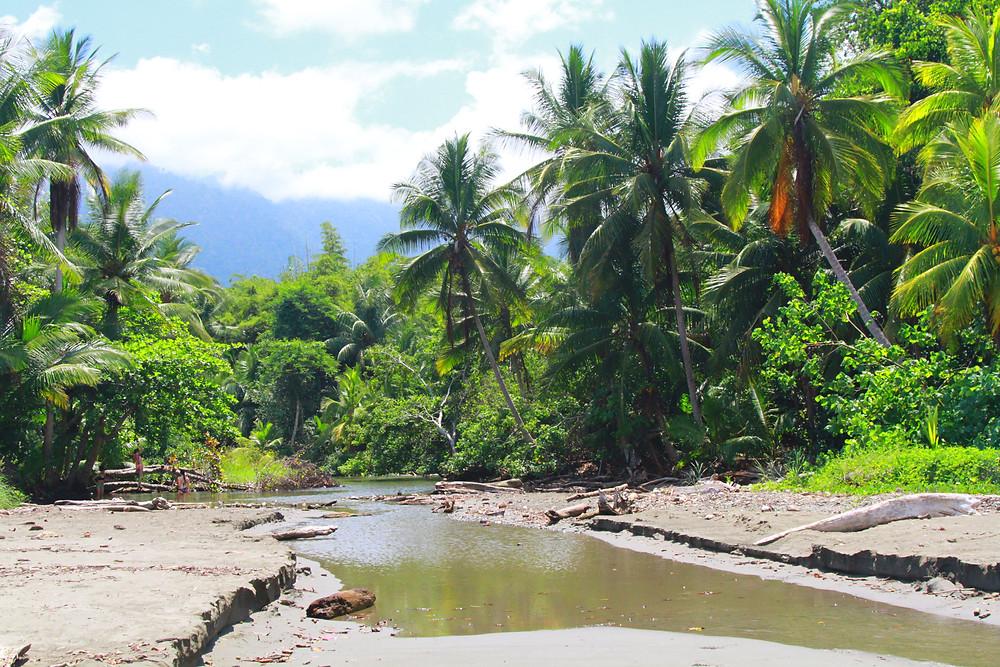 Playa Ventanas'ta son bulan küçük nehir ve palmiye ağaçları