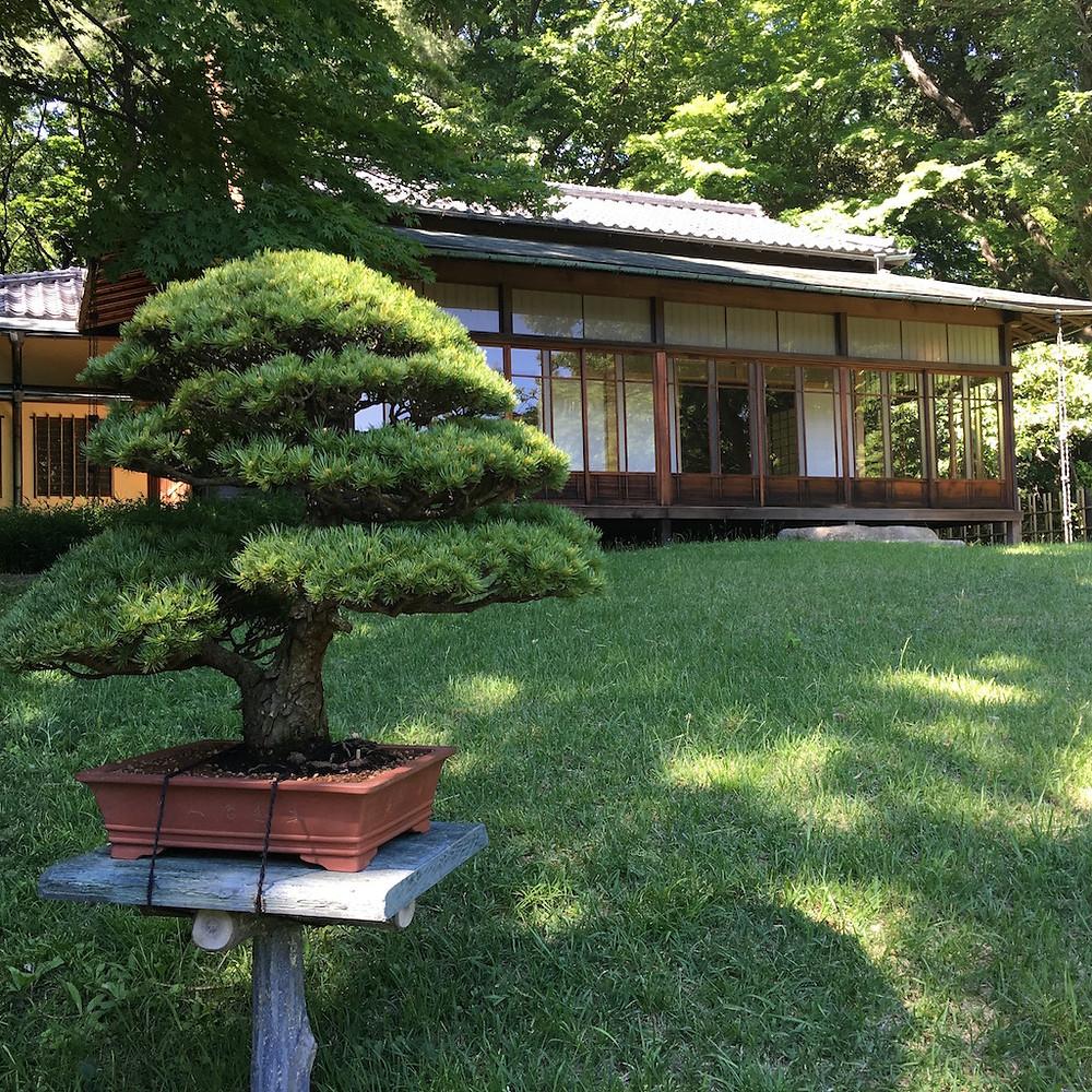 Geleneksel ve tarihi bir Tea House