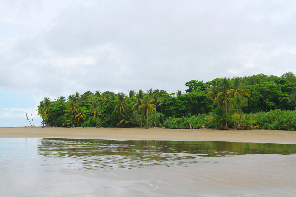 Palm trees, ocean and the sand at the Marino Ballena Park in Uvita, Costa Rica