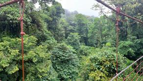 Kosta Rika ve Bulutların İçindeki Ormanları