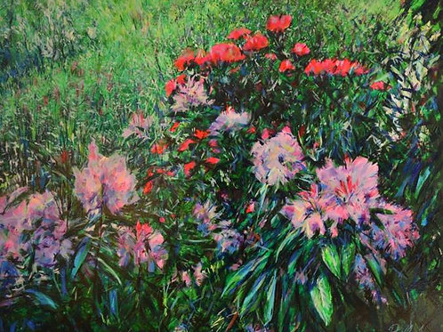 Peter Wood - Rhododendrons