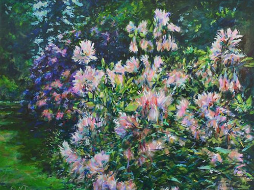 Peter Wood - Rhododendrons, La Sedelle