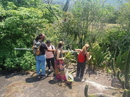 Niterói e UFF fazem diagnóstico da flora da Ilha do Pontal