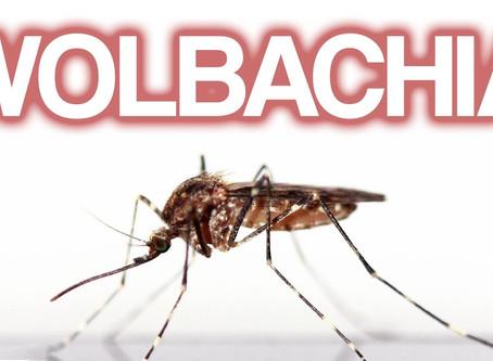Wolbachia: a bactéria que ajudou reduzir em 75% os casos de chicungunha em Niterói