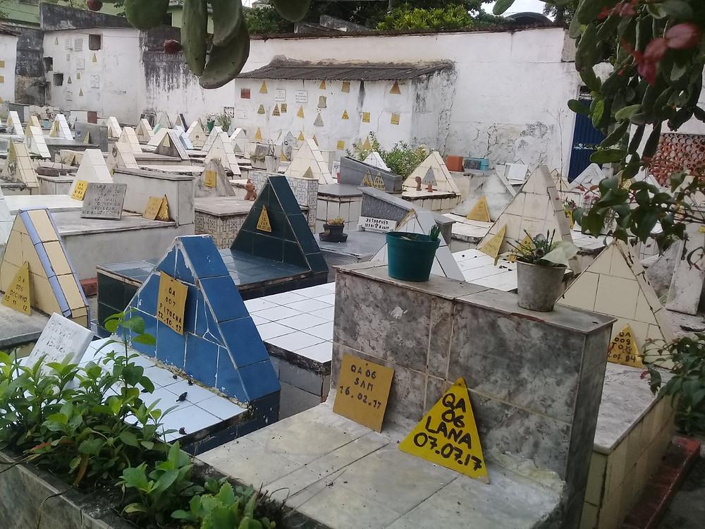 Cemitério de cães de Marambaia/Foto: Erick Bernardes