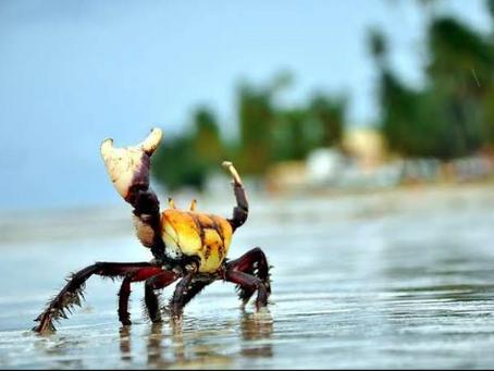 Espumas flutuantes da Praia da Beira, por Erick Bernardes