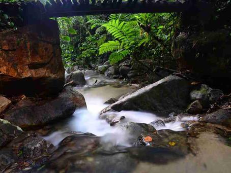 Nem tudo que reluz é rio ou ouro, por Erick Bernardes