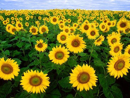 Onde estão as flores do meu Jardim Catarina? Por Erick Bernardes