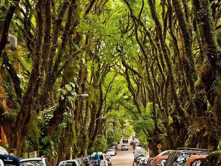 Árvore é cura para uma São Gonçalo adoecida, por Sammis Reachers